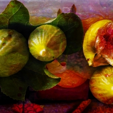Figs, Frogs and Red Onions