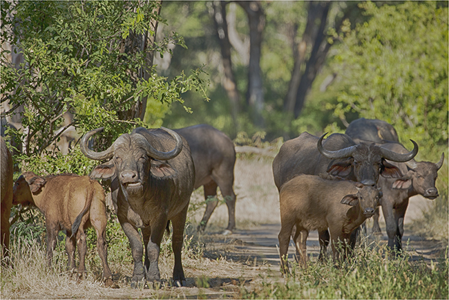 Getting It Right - Camping At Mana Pools - Image 12