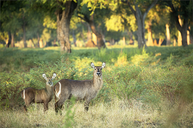 Getting It Right - Camping At Mana Pools - Image 20