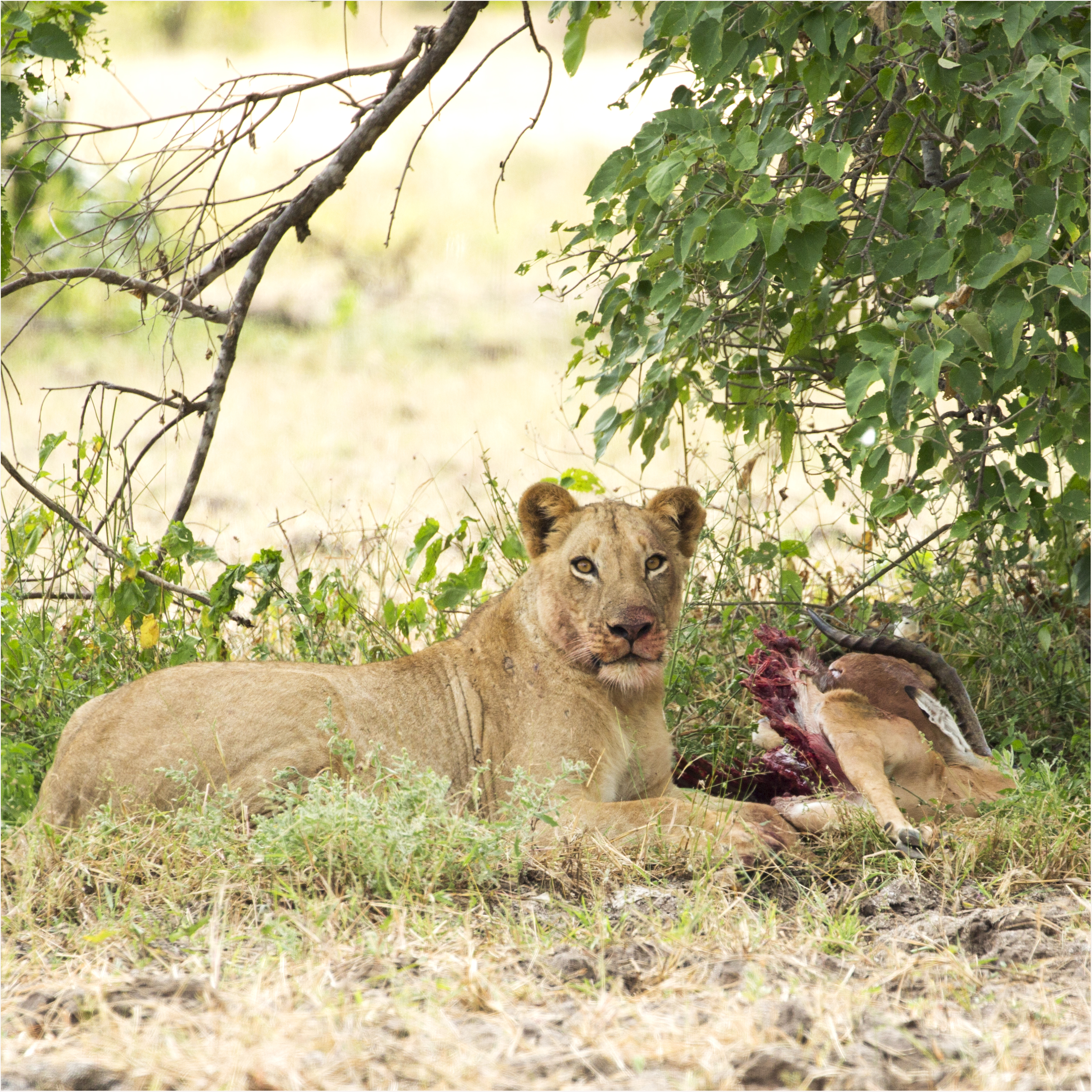 Getting It Right - Camping At Mana Pools - Image 30
