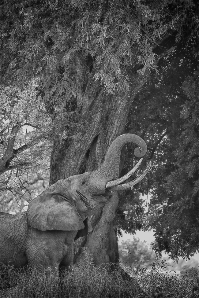 Getting It Right - Camping At Mana Pools - Image 4