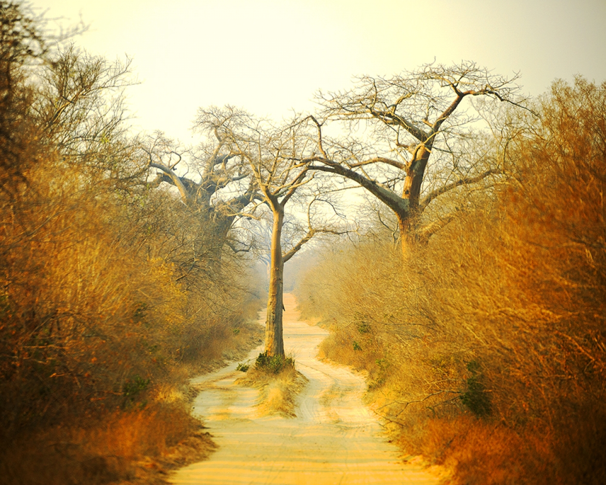 Mangwanani! Mana Pools