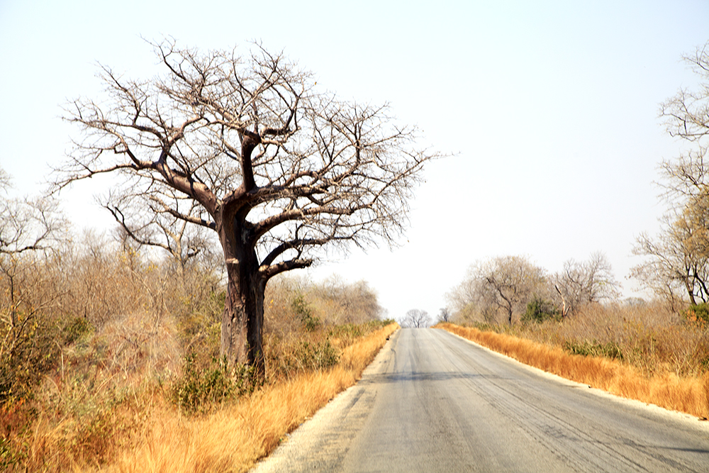 Roadtripping From Our Southern Shores to The Mighty Zambezi - Image 35