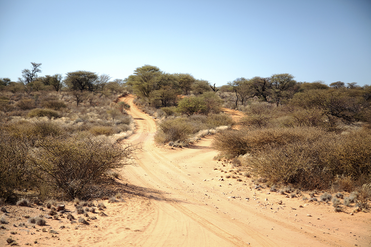The Fab Four Conquer The Kalahari - En Route to Mabuasahube - Image 10