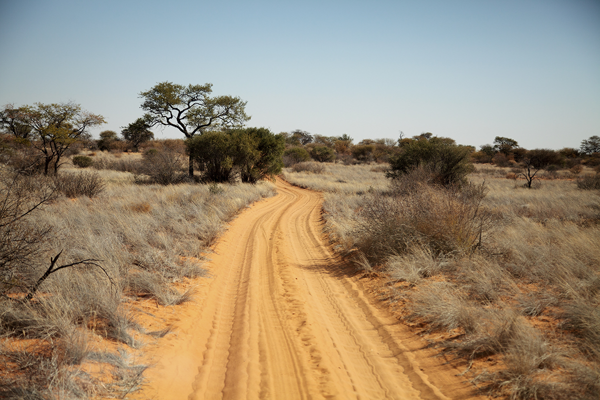 The Fab Four Conquer The Kalahari - En Route to Mabuasahube - Image 11