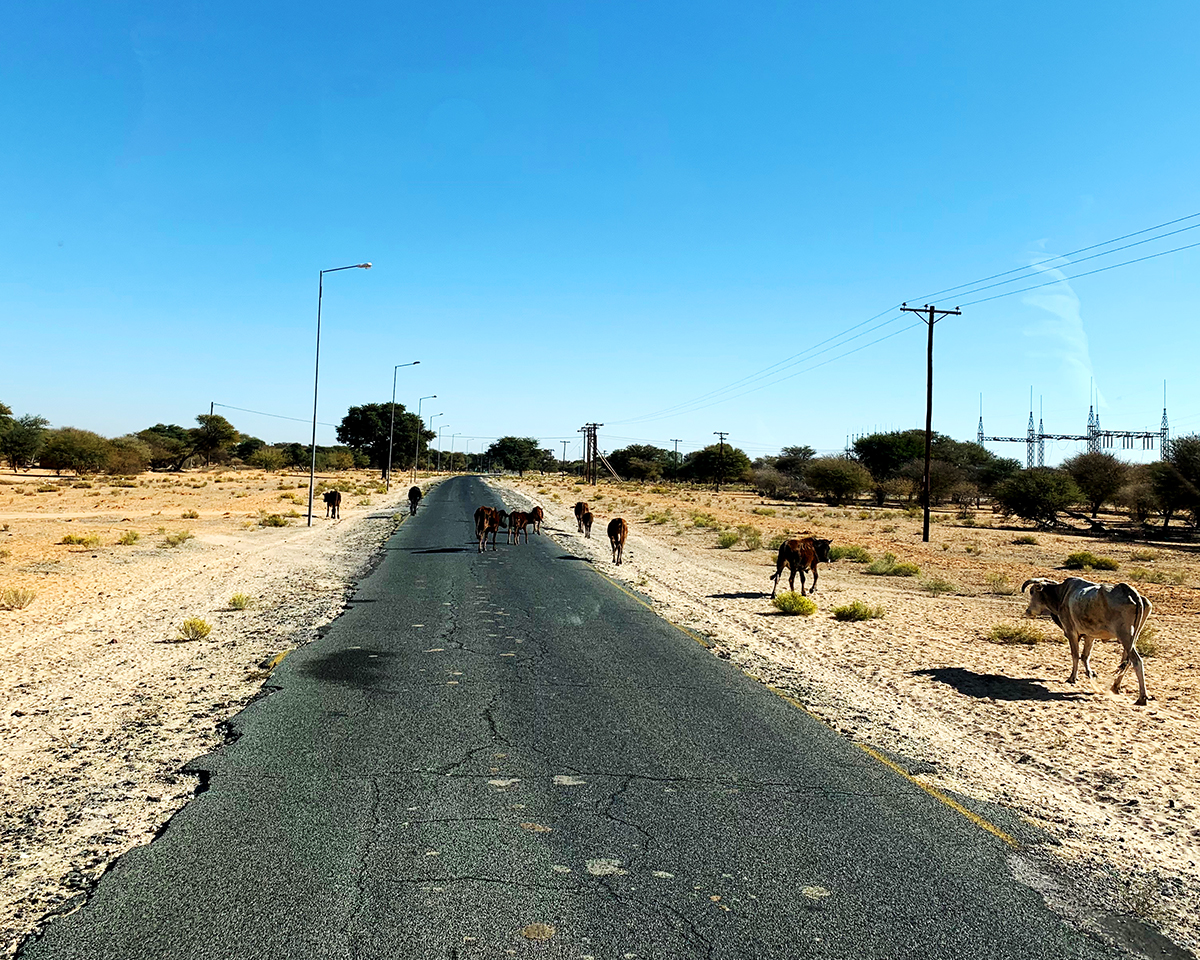The Fab Four Conquer The Kalahari - En Route to Mabuasahube - Image 29
