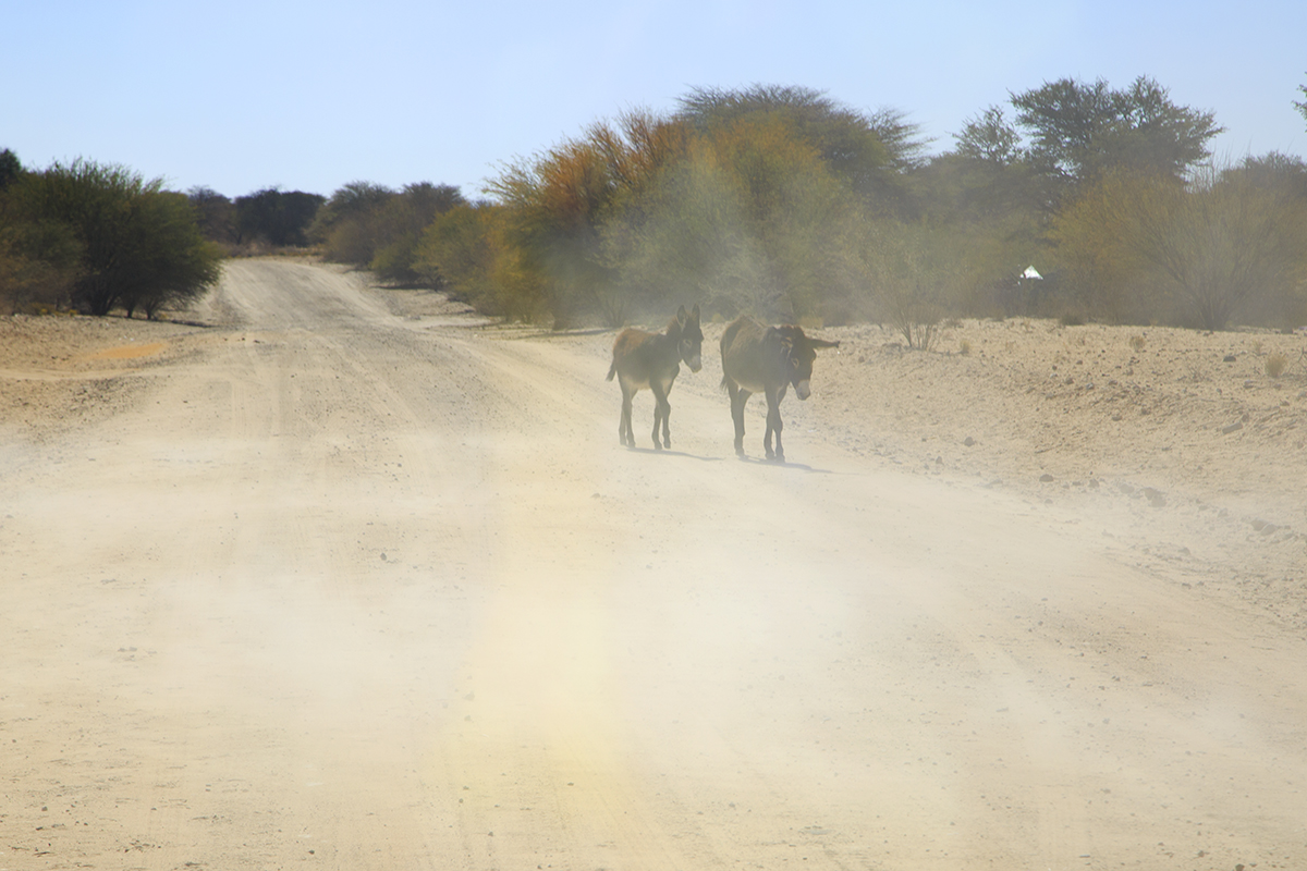 The Fab Four Conquer The Kalahari - En Route to Mabuasahube - Image 9