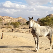 Coming to say cheers at sundowners! Wild horse of the Namib. #perfectday #perfect #sundown #evening #camping #namibia #namibdesert #wildhorses #horses #horse #maricha360