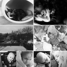 From early morning it's been grandbabies, whether they're furbabies or real babies gran'ma's been busy. Love ❤️ it all! #grandbabies #furbabies #cats #children #babies #grandma #granny #ouma