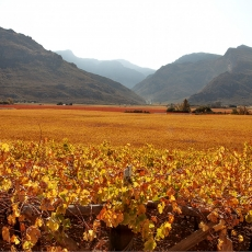 Hex River Valley Celebrating Autumn