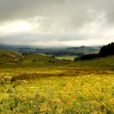 Searching For Magic Mushrooms - Hogsback - Eastern Cape Province