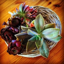Succulent #plants picked in a friends' garden #succulents #summer #garden #supercute #beautiful #natural #maricha360