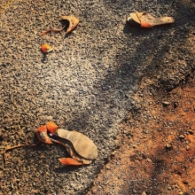 Morning run has many surprises, this morning I saw Cinderella's lost slippers, the bell tolled for these heels 👠 must've been quite a hobble home! #shoes #roadtrip #running #morning #fairytale #early #southafrica #maricha360 #whatanight #heels #stillet